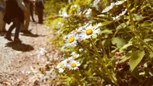 Spring Wildflower Pilgrimage Gatlinburg, Tennessee Photo Courtesy of Patrick T Cooper